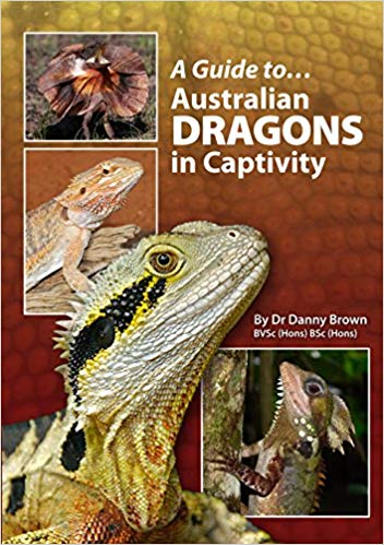 Australian Dragons In Captivity (A Guide to)