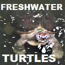 Freshwater Turtles of the world