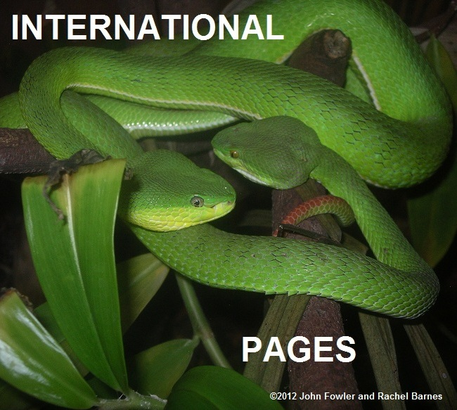 International Reptile pages