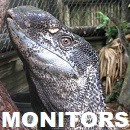 Monitors of The World