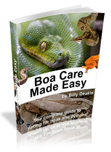 Boa Care made easy - the complete guide to caring for boas and pythons