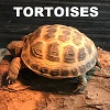 Tortoises of the would menu button